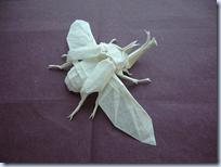 Origami Beetle