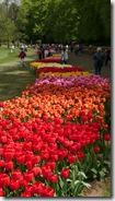 03 tulipani