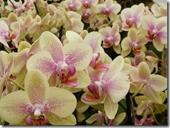 08 orhideje