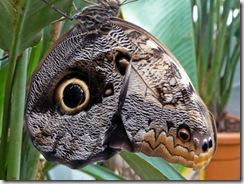 10 metulj