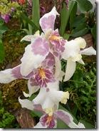 11 orhideja