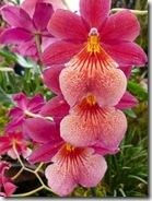 12 orhideja