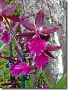 13 orhideja