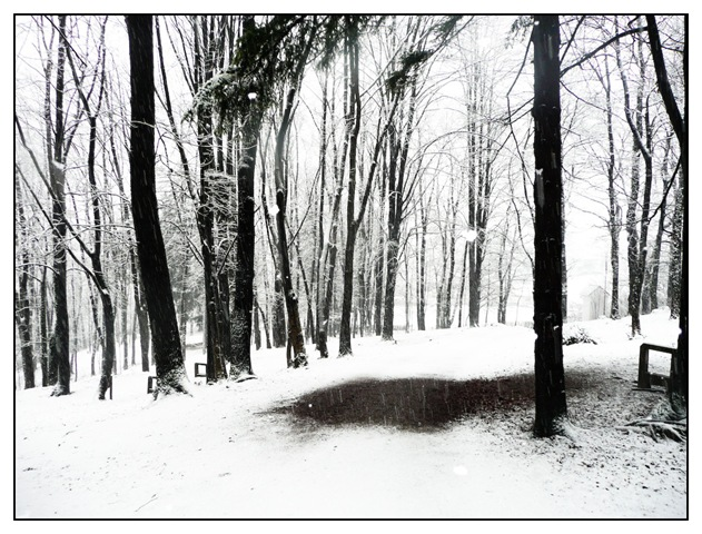 skozi gozd 2