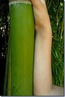 69 bambus in roka