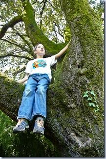 73 Simon na drevesu