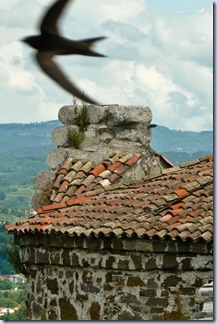 19 obzidje in lastovica