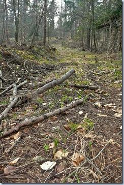 06 gozdna pot