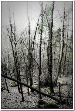 09 pogled v dolino