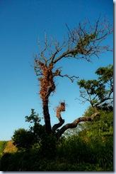 11 drevo
