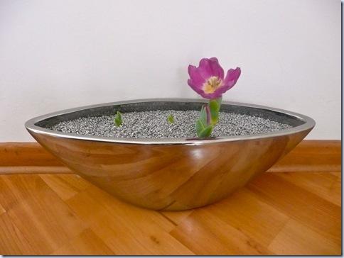 2009-03-06 prvi tulipan