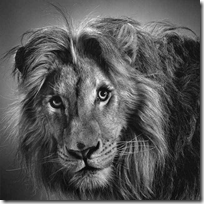 Pencil Art Lion
