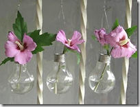 light bulbs / vases