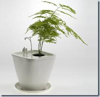 Adult Bonzai Planters