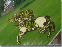 rice paddy crop art