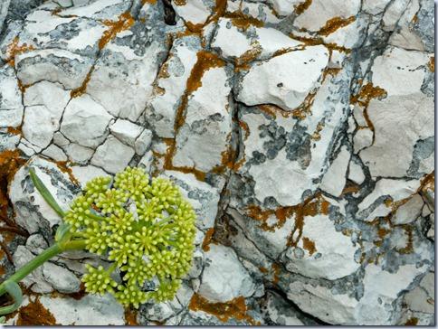 kamen in roža