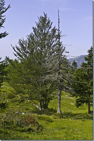 drevesa