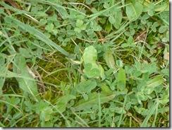 44 zelena žaba