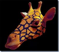 matchstick giraffe