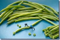 Green bean sawmill