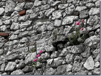05 vztrajne rože